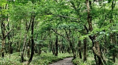 Photo of National Park 한라산 어리목 (Hallasan Eorimok/漢拏山 御里牧) at 해안동, 제주시, South Korea