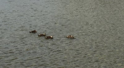 Photo of Lake 東北芸術工科大学 池 at 上桜田3-4-5, 山形市, Japan
