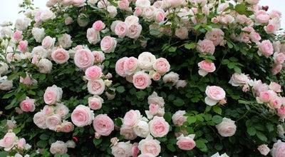 Photo of Garden ashikaga flower park at Japan