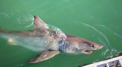 Photo of Harbor / Marina White Shark Adventure at 12 Geelbek Road, Kleinbaai, Gansbaai 7220, South Africa