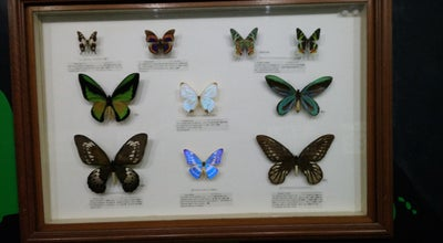 Photo of Zoo Butterfly Park & Insect Kingdom at 51 & 51a Cable Car Rd., Sentosa Island 099702, Singapore