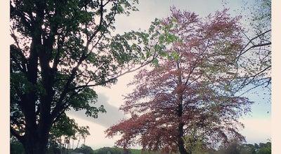 Photo of Park North Hagley Park at Park Terrace, Christchurch 8014, New Zealand