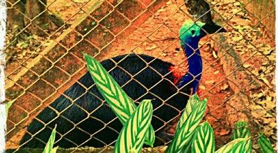 Photo of Zoo Bosque/Zoológico Municipal at R. José Deguer, S/n, São José do Rio Preto, Brazil