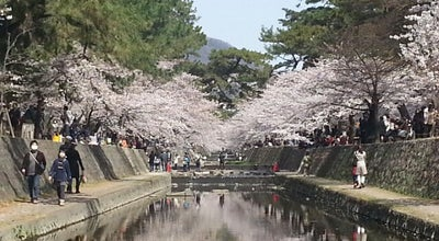 Photo of Park 夙川公園 at 結善町, 西宮市 662-0037, Japan