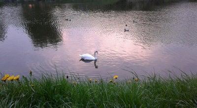Photo of Lake озеро на Репина at Belarus