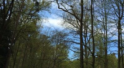 Photo of Trail Zoniënwoud - Promenade Flossendelle Wandeling at Belgium