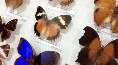 Photo of Garden Bali Butterfly Park Taman Kupu - Kupu at Jl. Batukaru, Dusun Sandan Lebah, Tabanan 80351, Indonesia