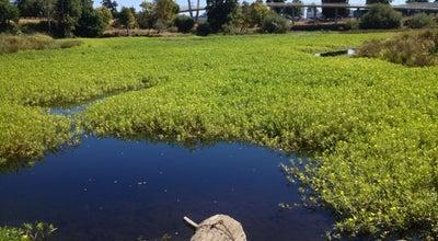 Photo of Lake Delta Ponds at 650 Goodpasture Island Rd, Eugene, OR 97401, United States
