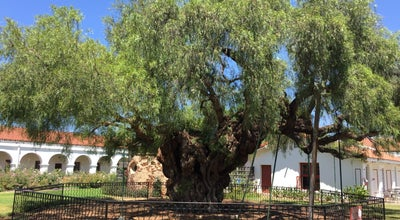 Photo of Historic Site The Oldest Pepper Tree in California at 4050 Mission Ave, Oceanside, CA 92057, United States