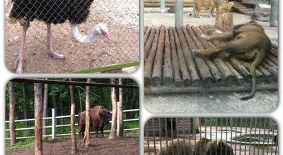 Photo of Zoo Зоопарк at Пкио Швейцария, Nizhny Novgorod 603104, Russia