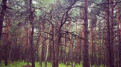 Photo of Trail Sciezka biegowa Falenica at Poland