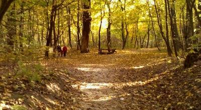 Photo of Park Голосіївський парк ім. Максима Рильського at Просп. Голосіївський, Київ, Ukraine
