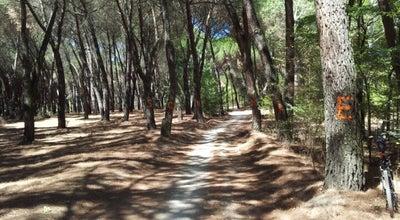 Photo of Park Casa de Campo at Casa De Campo, Madrid 28011, Spain