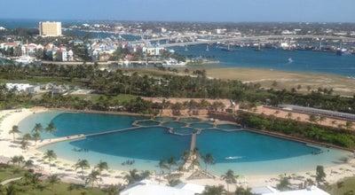Photo of Tourist Attraction Dolphin Cay at 1 Casino Drive, Paradise Island, Bahamas