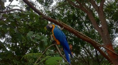 Photo of Botanical Garden Horto Florestal de Rondonópolis at Brazil