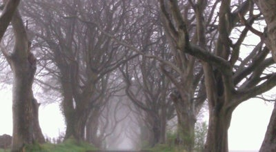 Photo of Historic Site The Dark Hedges at Bregagh Rd, Ballymoney B T53, United Kingdom
