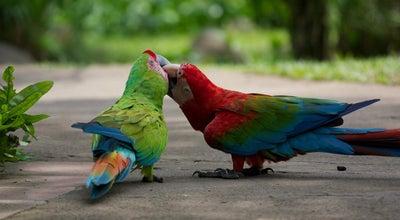 Photo of Park Bali Bird Park at Jalan Serma Cok Ngurah Gambir, Gianyar 80582, Indonesia