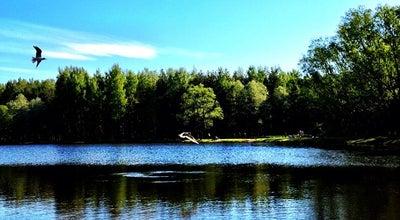 Photo of Lake Пруд Южный (парк Сосновка) at Russia