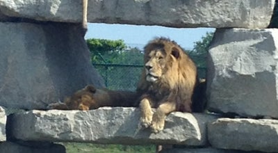 Photo of Zoo African Lion Safari at 1386 Cooper Rd., Hamilton, On N1R 5S2, Canada
