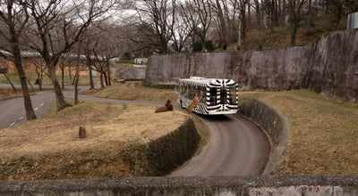 Photo of Arts and Entertainment 多摩動物公園 ライオン at 程久保7-1-1, 日野市, Japan