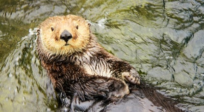 Photo of Aquarium Vancouver Aquarium at 845 Avison Way, Vancouver, Br V6G 3E2, Canada