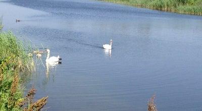 Photo of Lake Salaspils pīļu dīķis at Nometņu 50, Salaspils LV-2169, Latvia