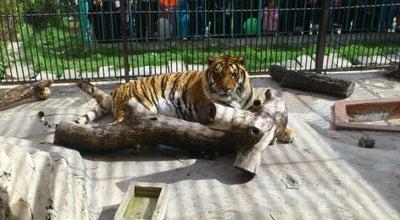 Photo of Zoo Zoo  Belvédère at Parc Zoologique Du Belvédére B.p 267, Tunis 1002, Tunisia