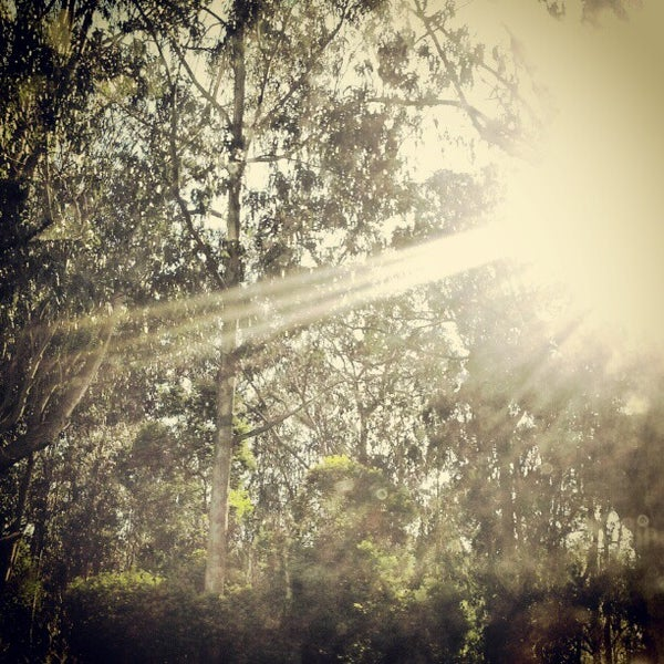 Photo taken at Sigmund Stern Grove by Naimah M. on 1/1/2013