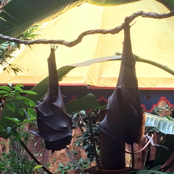 Photo taken at Maharajah Jungle Trek by Looper McNickelback on 9/28/2015