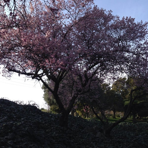 Photo taken at Japanese Friendship Garden by David B. on 2/16/2014