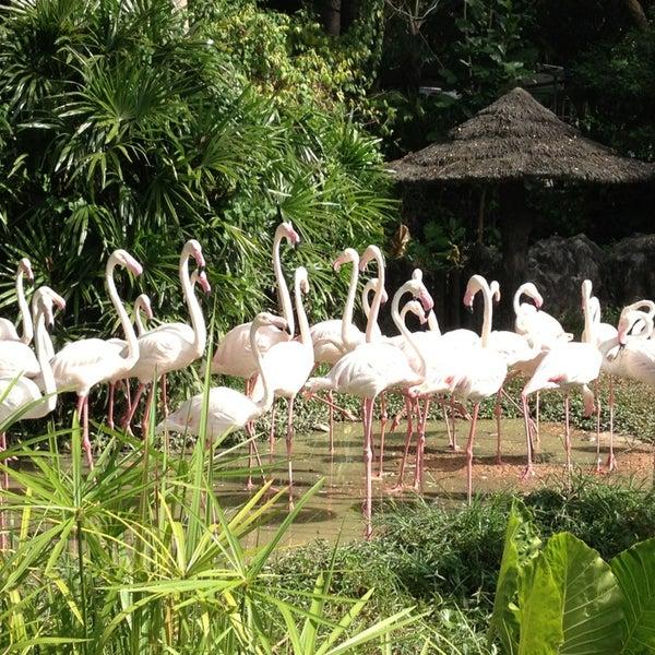 Photo taken at สวนสัตว์เปิดเขาเขียว (Khao Kheow Open Zoo) by Surasak W. on 12/21/2012