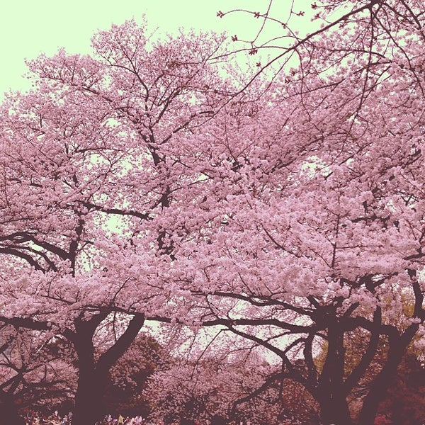 Photo taken at 新宿御苑 (Shinjuku Gyoen) by ykr_gnn on 3/23/2013