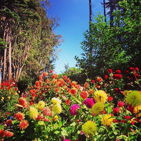 Photos At Mendocino Coast Botanical Gardens Garden In Fort Bragg