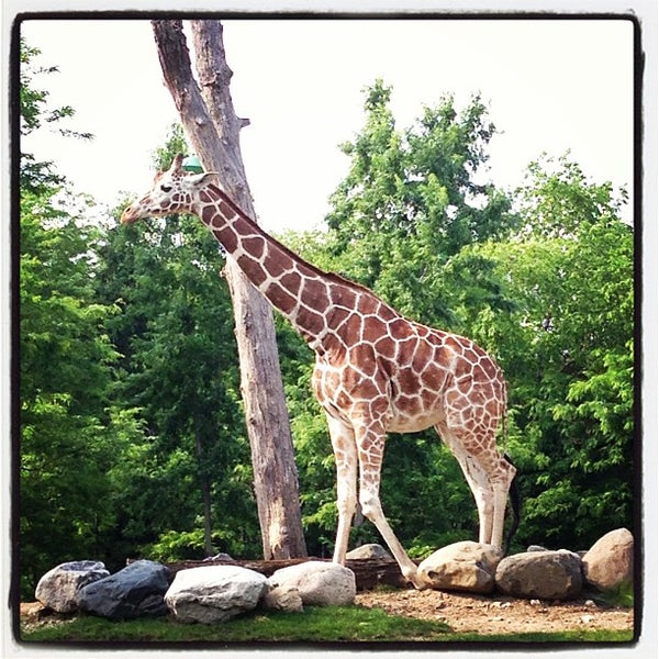 Photo taken at Lincoln Park Zoo by Madison B. on 6/22/2013