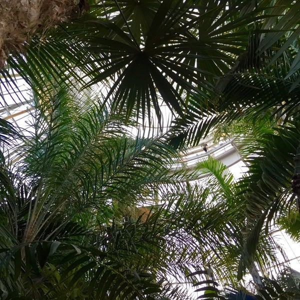 Photo taken at Enid A. Haupt Conservatory by Pat H. on 1/2/2016