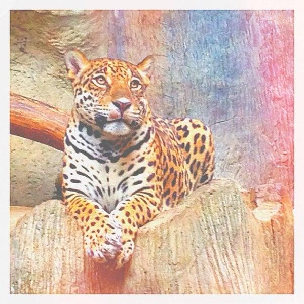 Photo taken at สวนสัตว์เปิดเขาเขียว (Khao Kheow Open Zoo) by PARIS P. on 5/25/2013