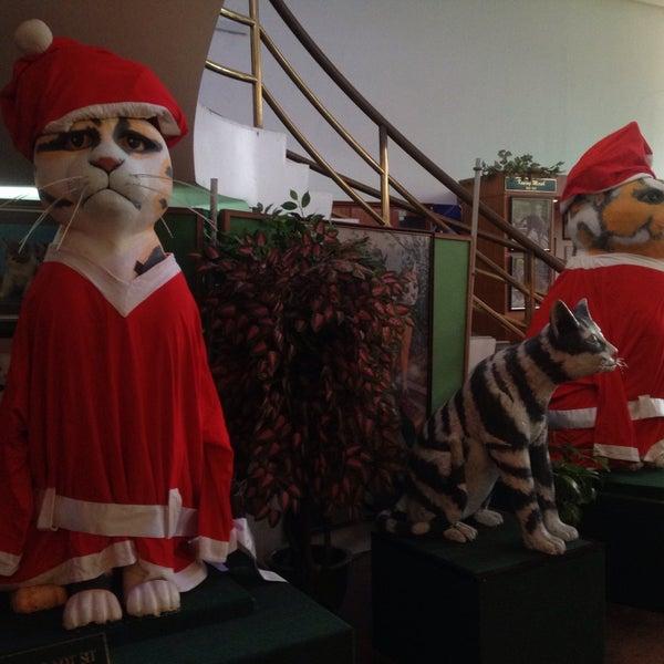 Photo taken at Cat Museum (Muzium Kucing) by kimi a. on 12/19/2014