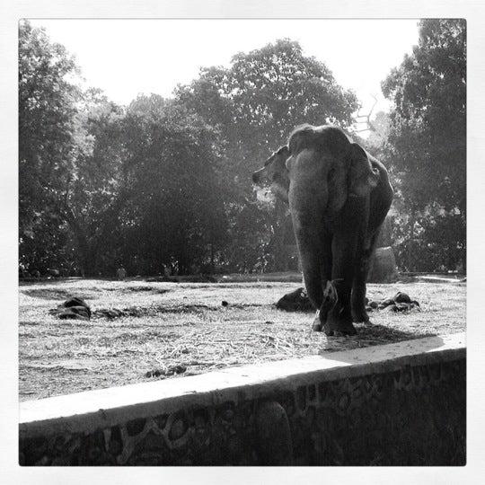 Photo taken at Kebun Binatang Ragunan by Ingmar v. on 6/17/2012