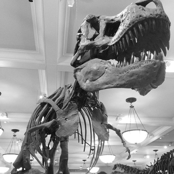 Photo taken at David H. Koch Dinosaur Wing by Kirk W. on 12/19/2012