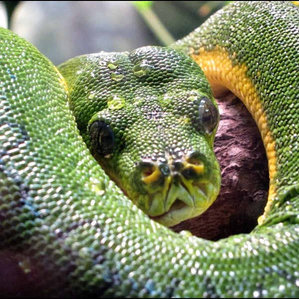 world of reptiles grant park atlanta ga. Black Bedroom Furniture Sets. Home Design Ideas