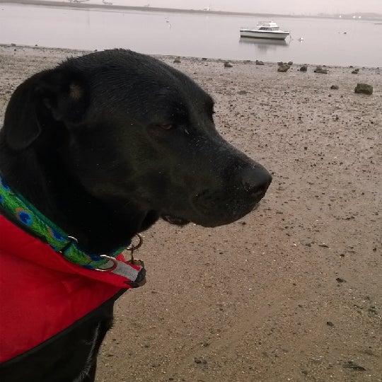Photo taken at Constitution Beach by Shawnee on 5/1/2014