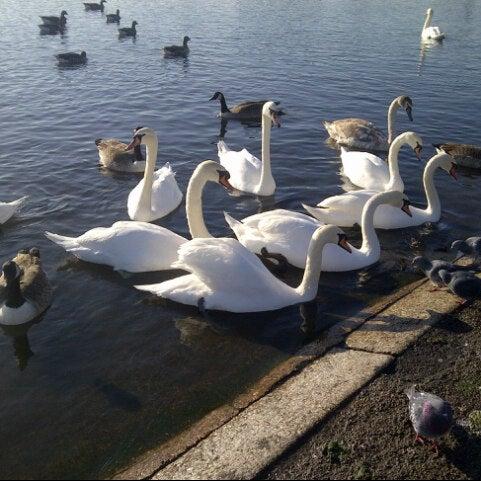 Photo taken at Kensington Gardens by Stella O. on 11/11/2012