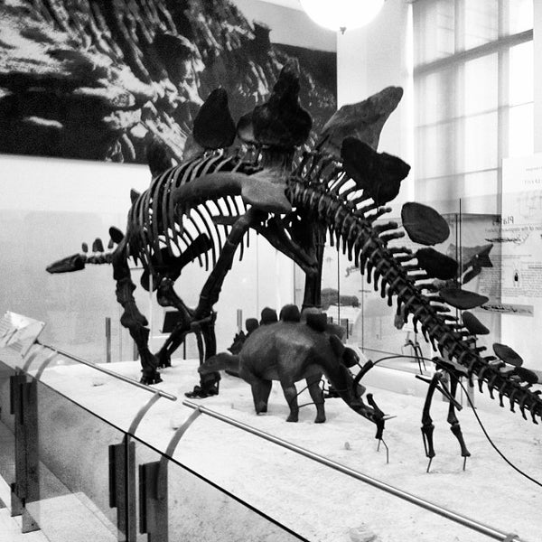 Photo taken at David H. Koch Dinosaur Wing by Yulia A. on 11/9/2013
