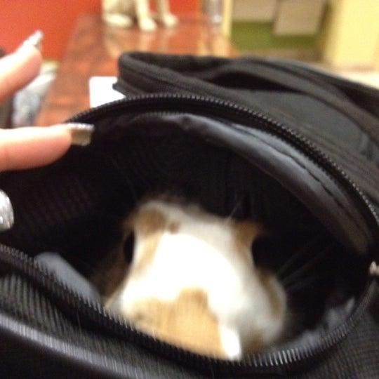 Photo taken at Aloha Animal Hospital by Tanya P. on 12/4/2012