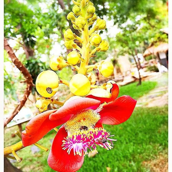 Photo taken at สวนสมเด็จพระนางเจ้าสิริกิติ์ฯ (Queen Sirikit Park) by Praphaporn on 7/25/2015