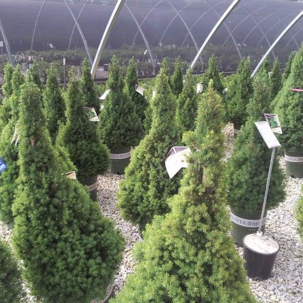suburban lawn garden martin city kansas city mo