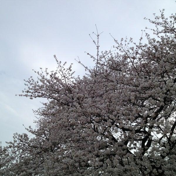 Photo taken at 新宿御苑 (Shinjuku Gyoen) by 藤本 拓. on 3/24/2013