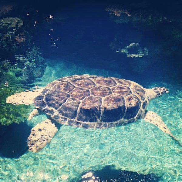 Photo taken at National Aquarium by Todd W. on 7/28/2013