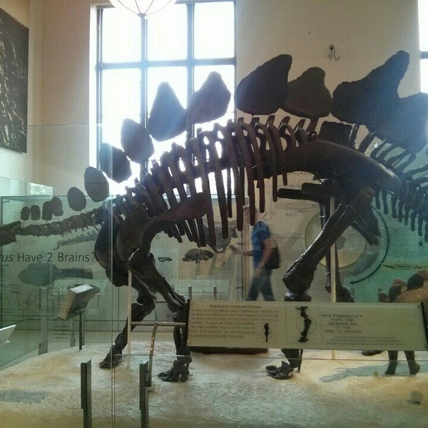 Photo taken at David H. Koch Dinosaur Wing by Dasha I. on 6/23/2016