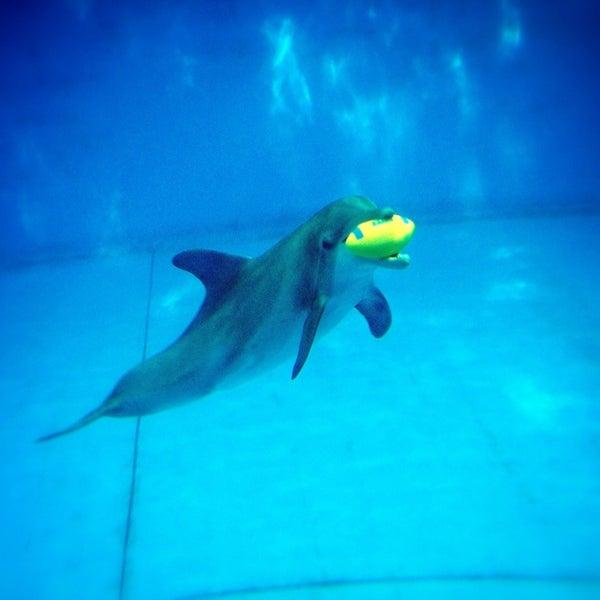 Photo taken at National Aquarium by Jennifer C. on 3/20/2013